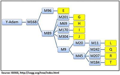 Y-STR Haplogroup Diversity in the Jat Population Reveals Several Different Ancient Origins