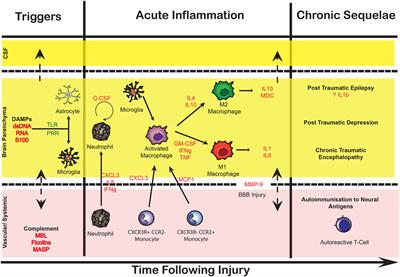 Frontiers | Monitoring the Neuroinflammatory Response