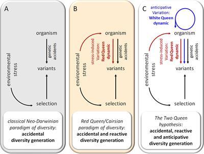 Frontiers   Diversity Generator Mechanisms Are Essential Components