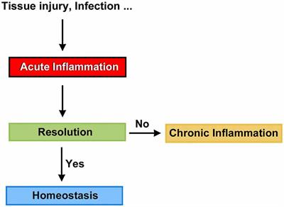 Frontiers | Resolution of Cochlear Inflammation: Novel