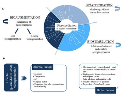 Frontiers plasmid mediated bioaugmentation for the for Soil research impact factor