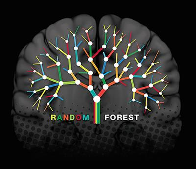 Frontiers | Random Forest Algorithm for the Classification of
