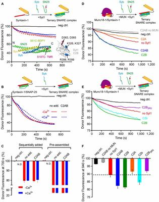 Frontiers A Stimulation Function Of Synaptotagmin 1 In Ternary