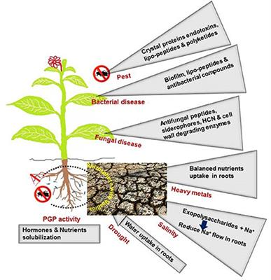 Cell and Molecular Aspects Bacterial Plant Pathology