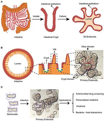 Cell Biology Of Salmonella Frontiers Research Topic