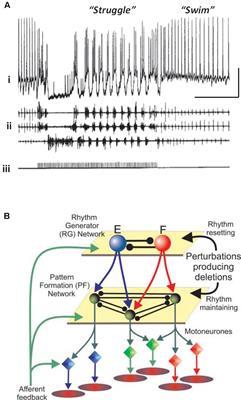 delta saw 28 640 wiring diagram schematics wiring diagram frontiers does epileptiform activity represent a failure of star delta connection diagram delta saw 28 640 wiring diagram