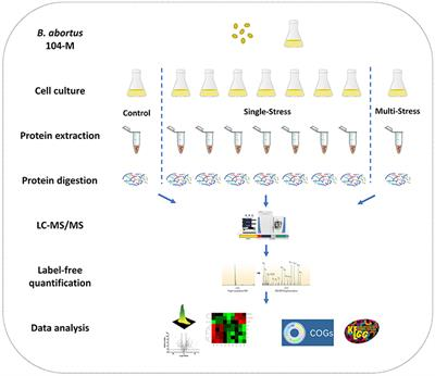 Frontiers | Relative Quantitative Proteomic Analysis of