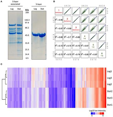Frontiers | Investigating the Effect of Growth Phase on the Surface