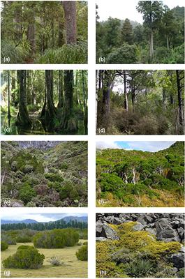 Frontiers | Palynology and the Ecology of the New Zealand