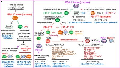 Frontiers | PD-1/PD-L1 Blockade: Have We Found the Key to
