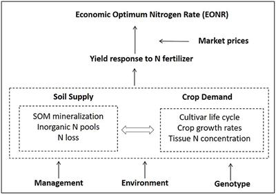 Frontiers | A Systems Modeling Approach to Forecast Corn