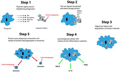 Types Of Email Accounts >> Frontiers | Alzheimer's Disease: The Role of Microglia in ...