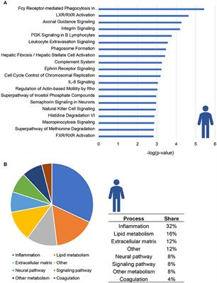 Frontiers Key Inflammatory Processes In Human NASH Are Reflected