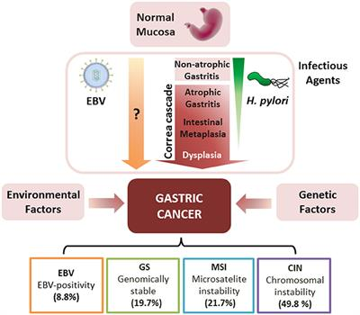 gastric cancer viral infection