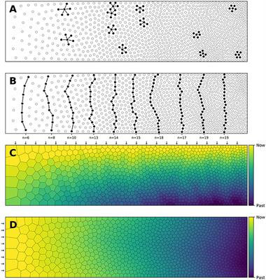 Frontiers | A Density-Driven Method for the Placement of