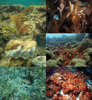 nieuwe afbeeldingen van uiterst stijlvol 100% echt Frontiers   Reefs under Siege—the Rise, Putative Drivers ...
