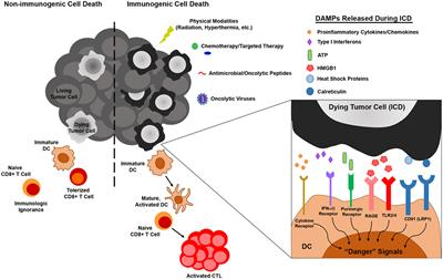 New Therapies And Immunological Findings In Melanoma And Other Skin Cancers Frontiers Research Topic