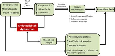Frontiers | Thrombosis and Vascular Inflammation in Diabetes: Mechanisms  and Potential Therapeutic Targets | Cardiovascular Medicine