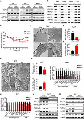Frontiers | AMP-Activated Protein Kinase (AMPK) Regulates Energy