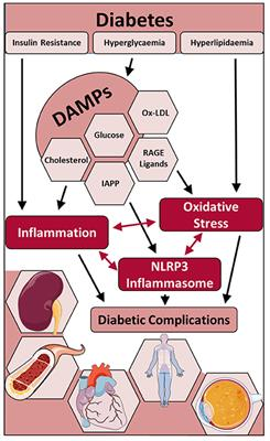 Frontiers   Oxidative Stress and NLRP3-Inflammasome Activity