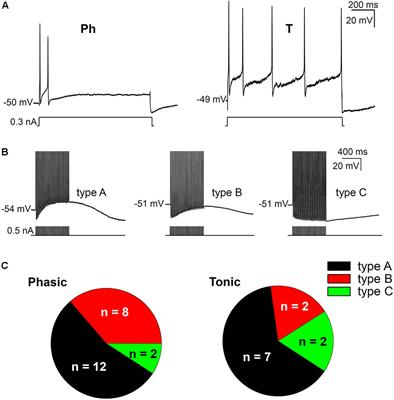 Frontiers   A Calcium-Dependent Chloride Current Increases
