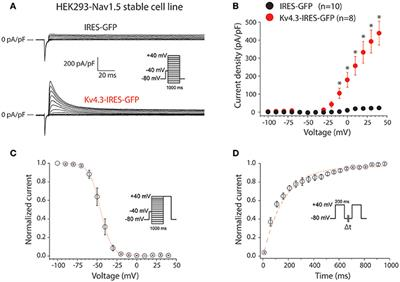 Frontiers   KV4 3 Expression Modulates NaV1 5 Sodium Current