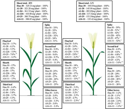 Frontiers | Rapid Generation of Barley Mutant Lines With