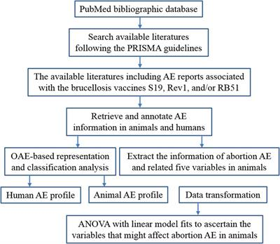 Frontiers | Ontology-Based Meta-Analysis of Animal and Human