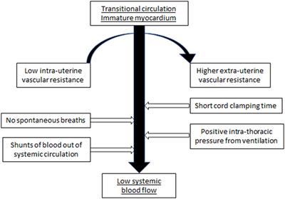 Frontiers | The Pathophysiology of Low Systemic Blood Flow