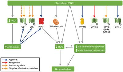 Frontiers | Cannabidiol as a Promising Strategy to Treat and