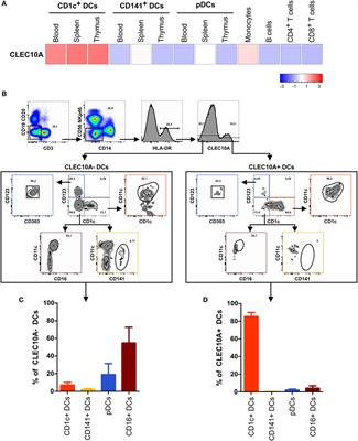 Frontiers | CLEC10A Is a Specific Marker for Human CD1c+ Dendritic ...