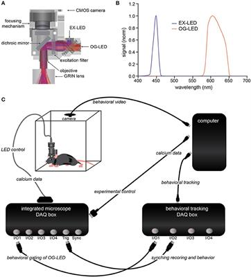 frontiers simultaneous optogenetics and cellular resolution