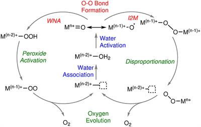 Frontiers Computational Modeling Of Cobalt Based Water Oxidation