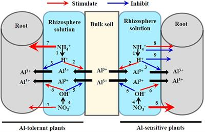 Frontiers Aluminum Nitrogen Interactions In The Soil Plant System. Frontiers Aluminum Nitrogen Interactions In The Soil Plant System Science. Wiring. Ricon S Series Wiring Diagram 1231 At Scoala.co