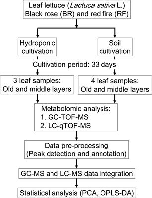 Frontiers | Metabolomic Evaluation of the Quality of Leaf Lettuce