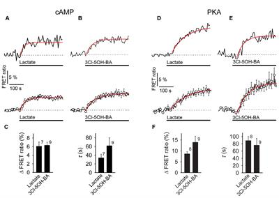 Frontiers | Enhancement of Astroglial Aerobic Glycolysis by