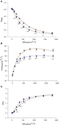 Frontiers | Photochemistry and Antioxidative Capacity of