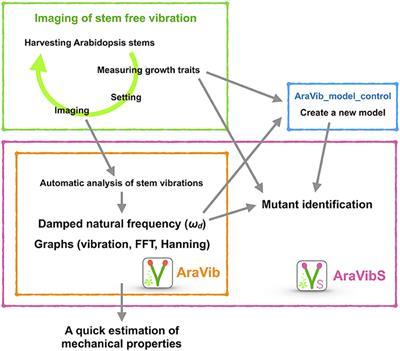 Frontiers | High-Throughput Analysis of Arabidopsis Stem Vibrations
