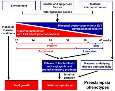 How Severe Maternal Inflammation Can >> Frontiers Integrated Systems Biology Approach Identifies Novel