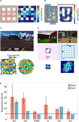Frontiers | Spatial Representations in the Human Brain