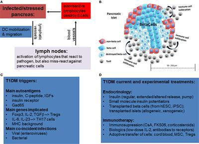 Frontiers | Approaches in Immunotherapy, Regenerative