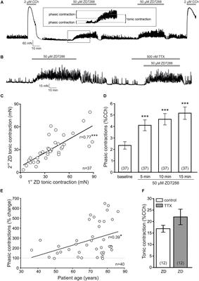 Frontiers | Hyperpolarization-Activated Cyclic Nucleotide-Gated Non