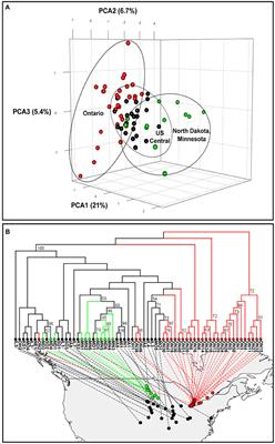 Frontiers | Genome Scans Reveal Homogenization and Local