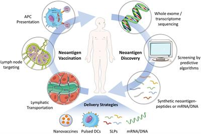 Frontiers Neoantigen Vaccine Delivery For Personalized