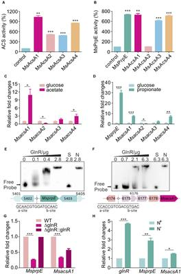 Frontiers | GlnR-Mediated Regulation of Short-Chain Fatty