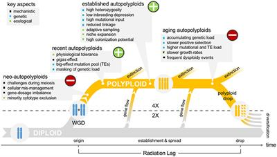 "Frontiers | The ""Polyploid Hop"": Shifting Challenges and"