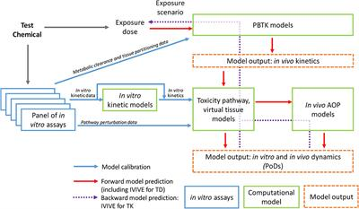 Frontiers | Bridging the Data Gap From in vitro Toxicity Testing to