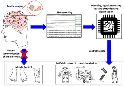 Frontiers | EEG-Based BCI Control Schemes for Lower-Limb