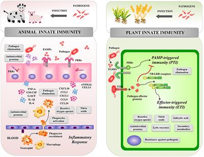 Frontiers | Receptors and Signaling Pathways for Recognition