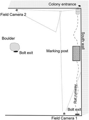 frontiersin.org - Temporal and Space-Use Changes by Rats in Response to Predation by Feral Cats in an Urban Ecosystem